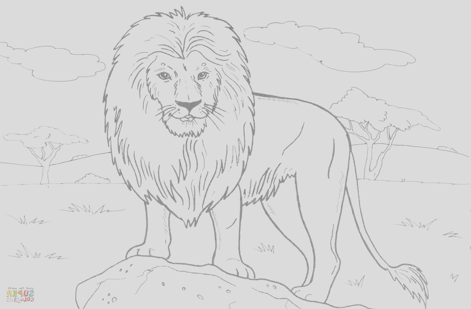 african lion drawing