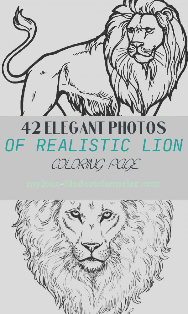 Realistic Lion Coloring Page Inspirational Realistic Lion Coloring Page