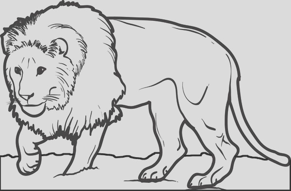realistic lion coloring page for kids a4385