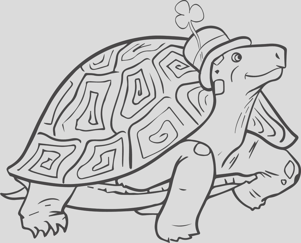 st patricks day turtle coloring page a4535