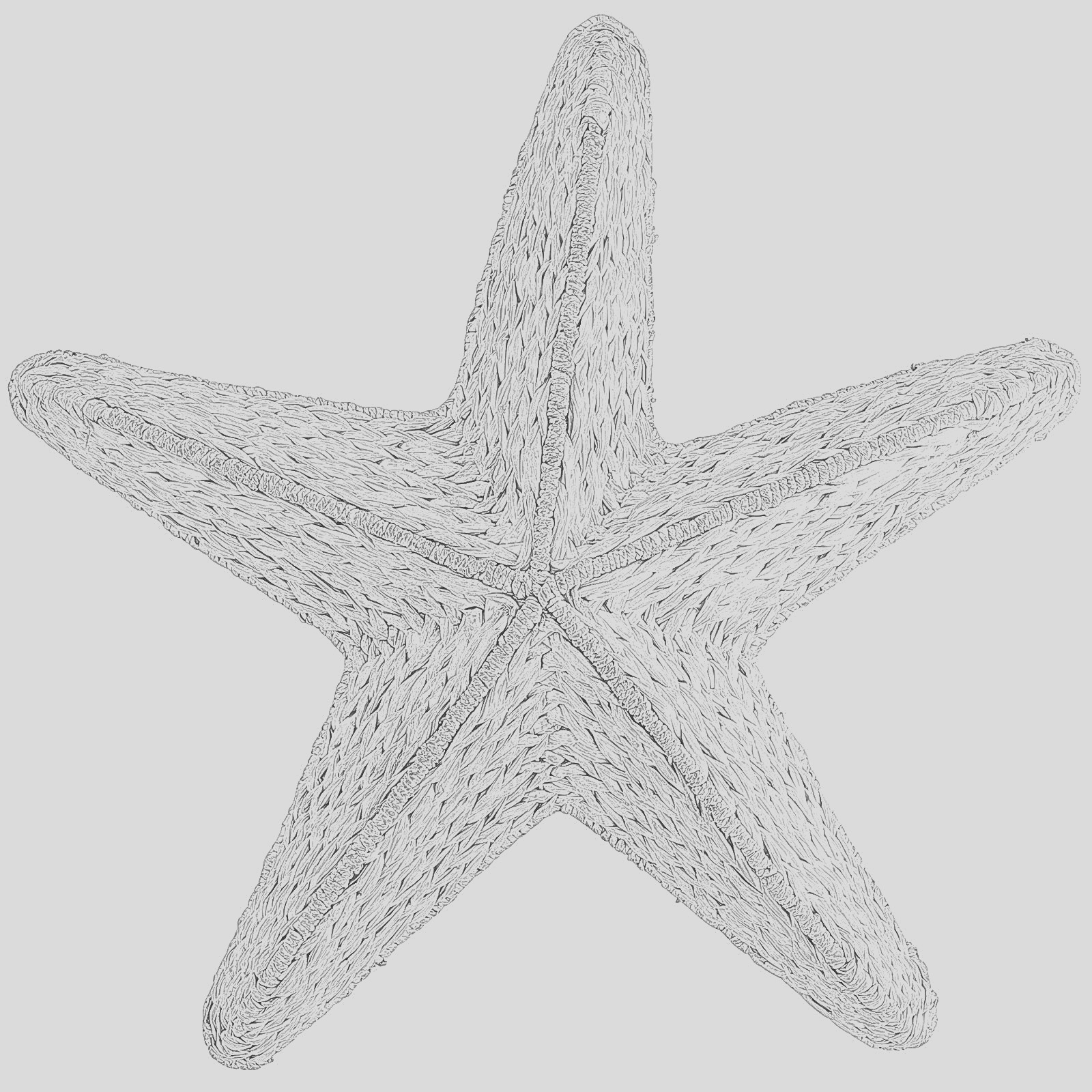 starfish sea stars coloring pages