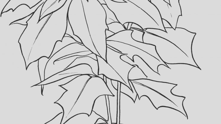 Poinsettia Coloring Sheet Awesome Free Printable Poinsettia Coloring Pages for Kids