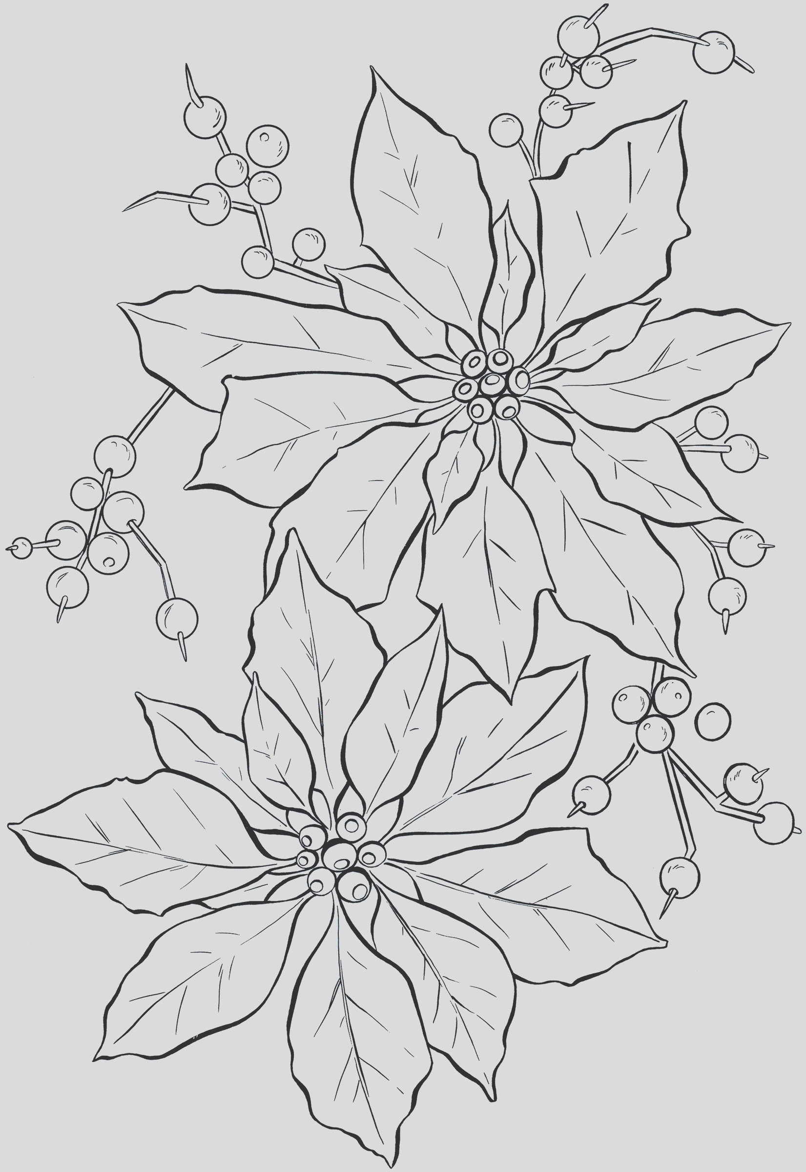 poinsettia coloring pages