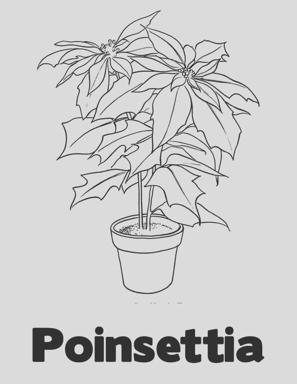 p is for poinsettia coloring page