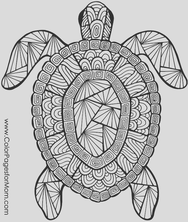 coloring turtles