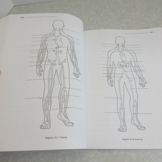 anatomy and physiology coloring workbook answer key chapter 4
