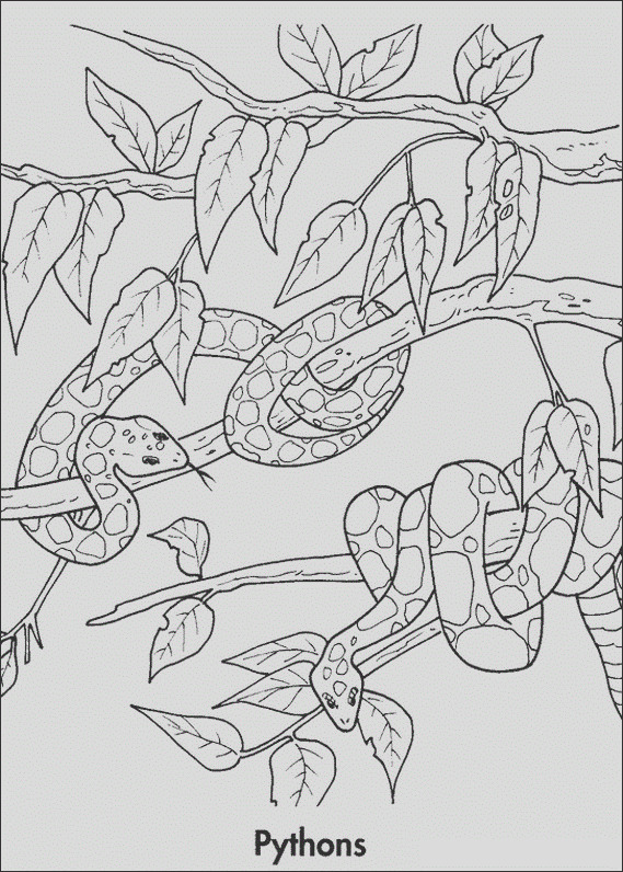 rainforest coloring pages endangered species coloring pages for free 5