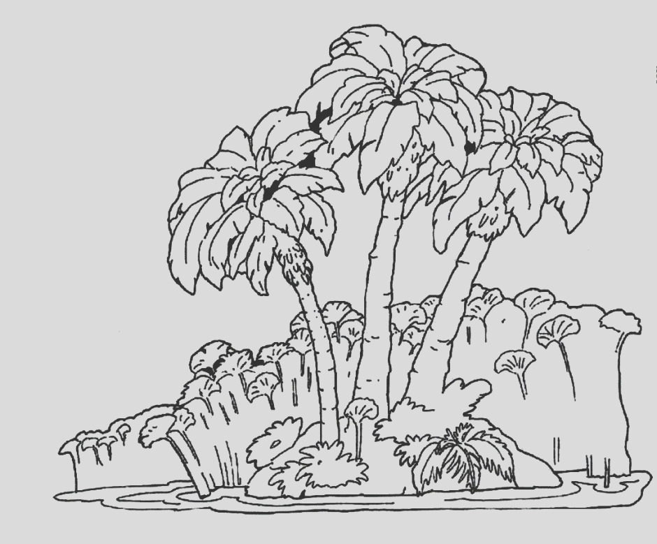 tropical rainforest drawing
